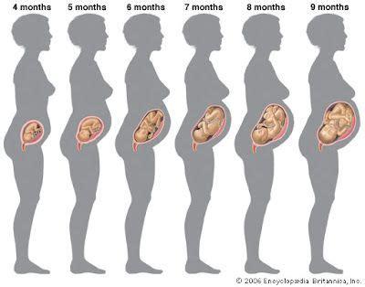 Dissertation in 3 months pregnant